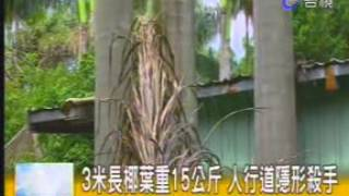 媒體報導:林世宗議員抨擊公務員不作為,天降橫禍,社子公園椰子葉砸老翁頭破血流---台視電視台